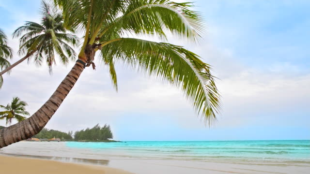 palm bend over empty beach - 10 seconds or greater stock videos & royalty-free footage