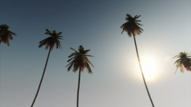 palm boulevard drive - looopable - palm tree stock videos & royalty-free footage