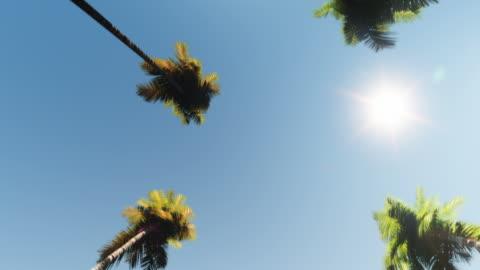 vidéos et rushes de drive-looopable palm boulevard - vue en contre plongée verticale