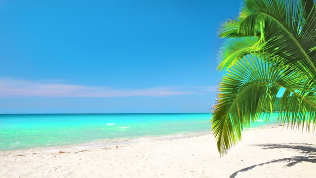 palm bush on the beach - tropical bush stock videos & royalty-free footage