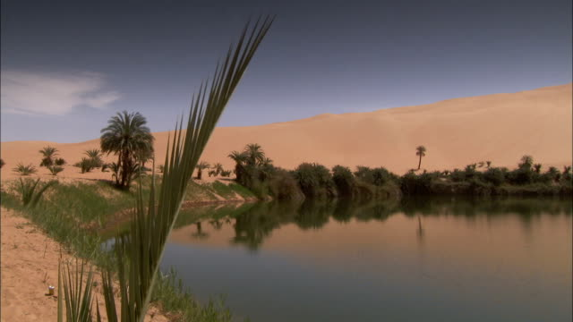 a palm frond and trees grow around the edge of an oasis near ubari libya. available in hd. - desert oasis stock videos & royalty-free footage