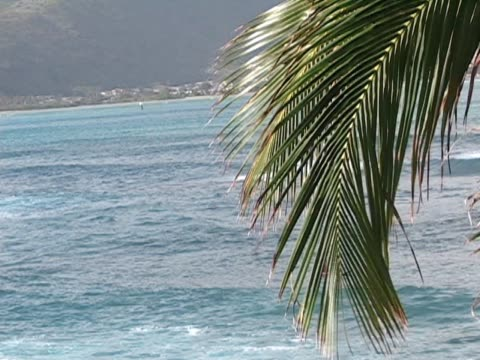 palm frond hangs over the ocean - frond stock videos & royalty-free footage