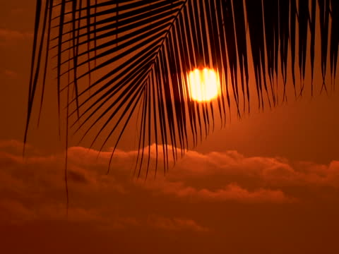 palm frond silhouette zoom - frond stock videos & royalty-free footage