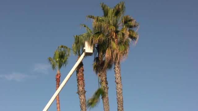 vidéos et rushes de (hd1080i) palmiers de - quatre objets