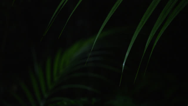 """""""palm fronds in forest at night, philippines"""" - south east asia stock videos & royalty-free footage"""