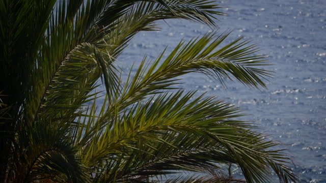 palm fronds juxtaposed against seawater - palm tree stock videos & royalty-free footage