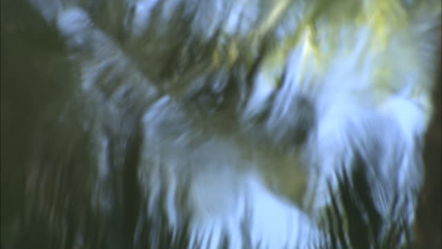 palm fronds reflect off rippling water. - palmenblätter stock-videos und b-roll-filmmaterial