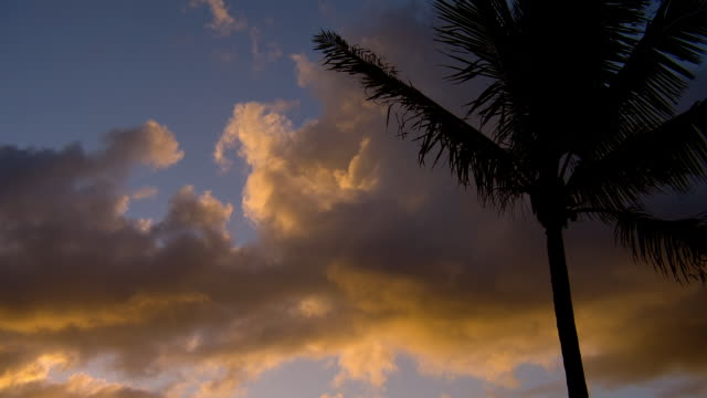 Palm fronds sway in the breeze beneath clouds illuminated by golden sunlight.