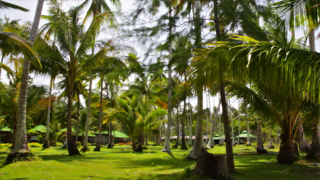 palm grove before bungalow - grove stock videos & royalty-free footage