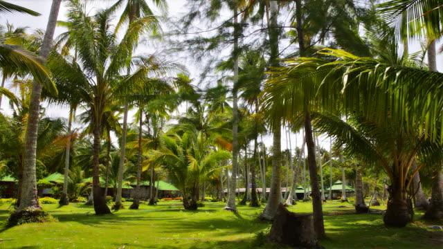 palm grove, bungalow - wäldchen stock-videos und b-roll-filmmaterial