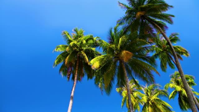 vídeos y material grabado en eventos de stock de palm en el cielo - antillas occidentales