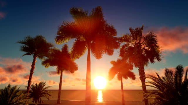 palm island at sunset - tropical tree stock videos & royalty-free footage