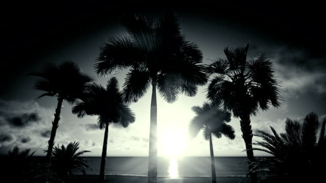 palm island silhouette - tropical tree stock videos & royalty-free footage