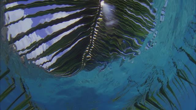 SLO MO CU LA Palm leaf and sky seen through water surface / Moorea, Tahiti, French Polynesia