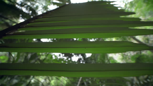 palm leaf in forest - palmenblätter stock-videos und b-roll-filmmaterial