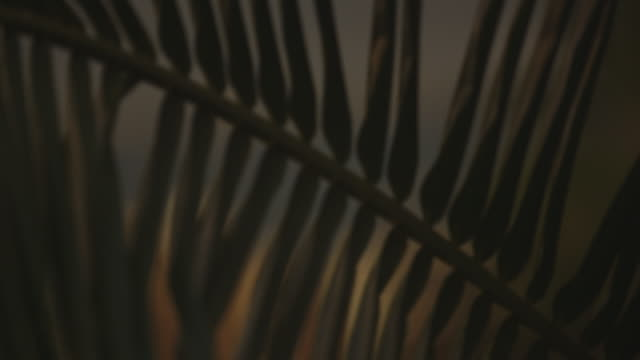cu palm leaf in warm evening sunlight - やしの葉点の映像素材/bロール