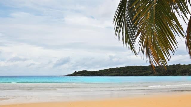 palm leaf over sea - palm leaf stock videos & royalty-free footage