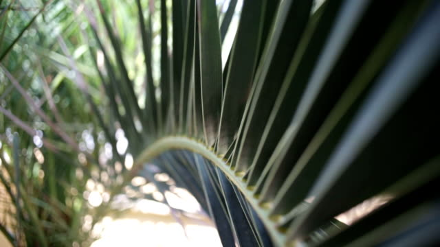 palm leaf - branch plant part stock videos and b-roll footage