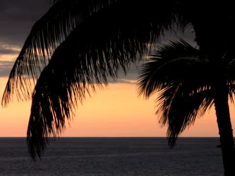 NTSC: palm leaf
