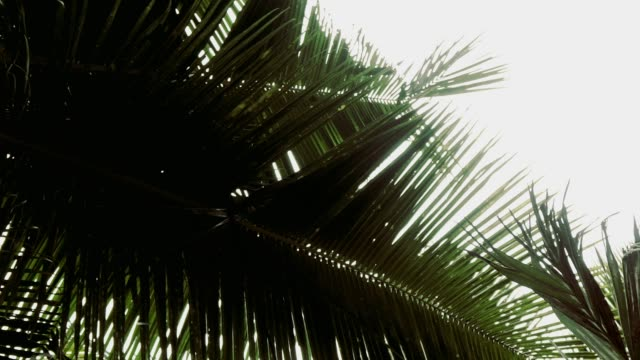 palm leaf - branch plant part stock videos & royalty-free footage
