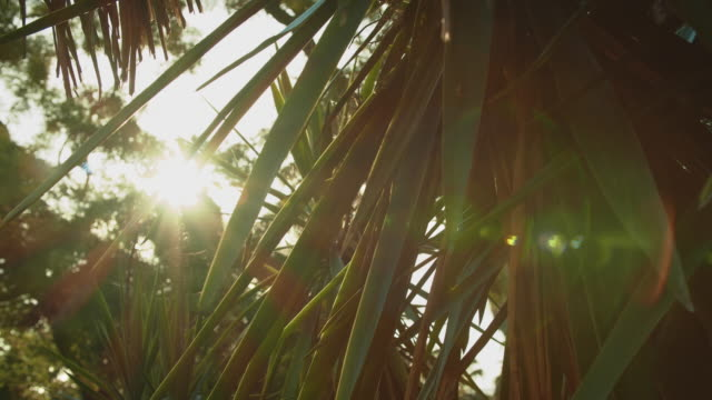 palm leaf - palm leaf stock videos & royalty-free footage