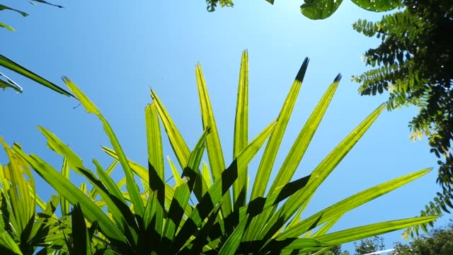 palm leaf with sunlight - palm leaf stock videos & royalty-free footage
