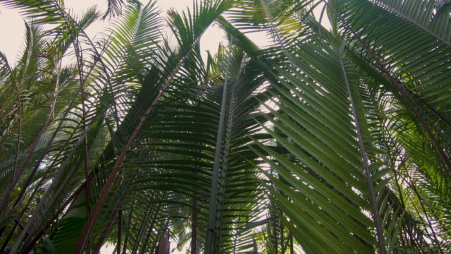 palm leaves are swaying on the wind - vietnam stock videos & royalty-free footage