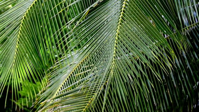 palm leaves are swaying on the wind - palm tree stock videos & royalty-free footage