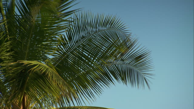 Palm leaves gently sway in a breeze.