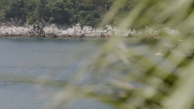 selective focus palm leaves revealing boats and a cruise ship moving through the sea near a rocky coastline of greenery - herumfahren stock-videos und b-roll-filmmaterial