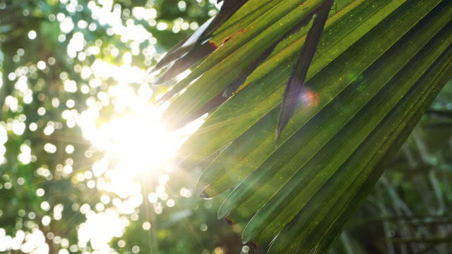 palm leaves were blown by the wind. - palm tree stock videos & royalty-free footage