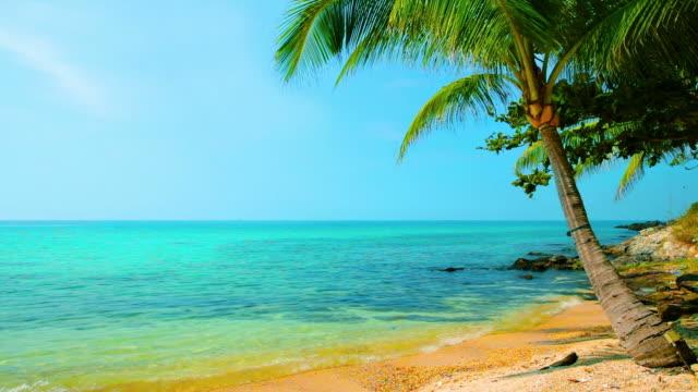 パーム海の近く - 熱帯気候点の映像素材/bロール