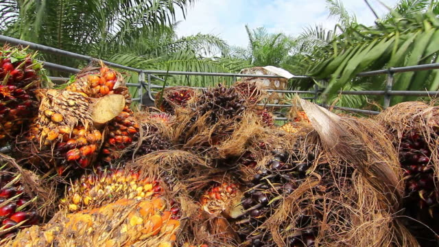 Palm Oil Fruit Transportation