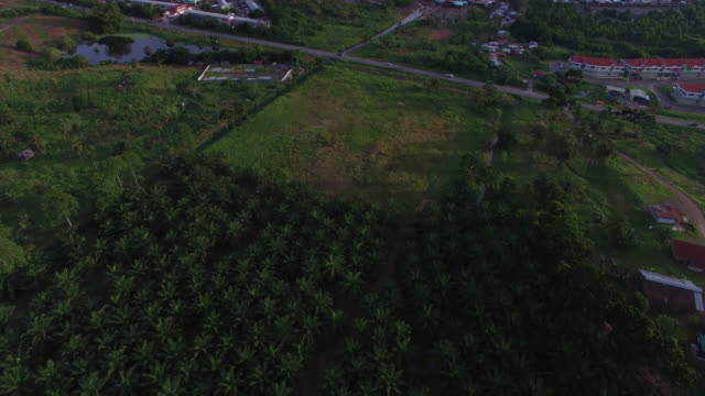 palm oil plantation, tilt up to reveal town and coast - town stock videos & royalty-free footage