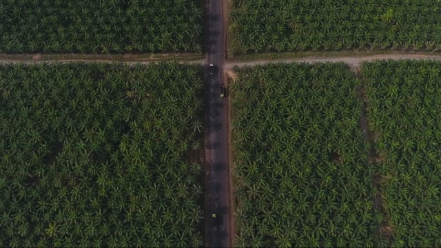 palm oil plantations - palm tree stock videos & royalty-free footage