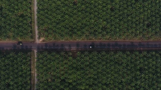 palm oil plantations - plantation stock videos & royalty-free footage
