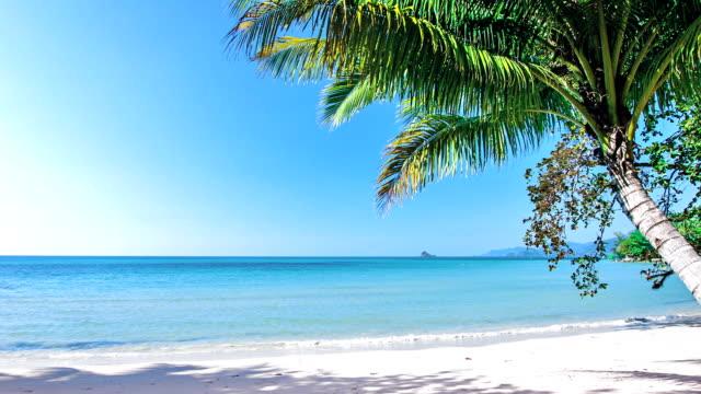 Palm op een zonnig strand