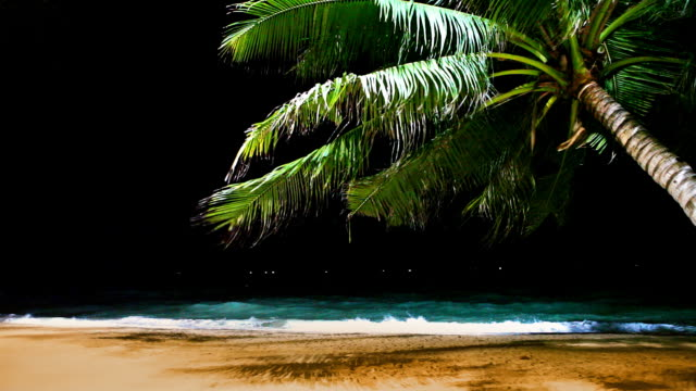 palm on the beach in night - coconut palm tree stock videos & royalty-free footage