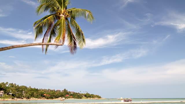 vidéos et rushes de palmier sur la plage - french overseas territory