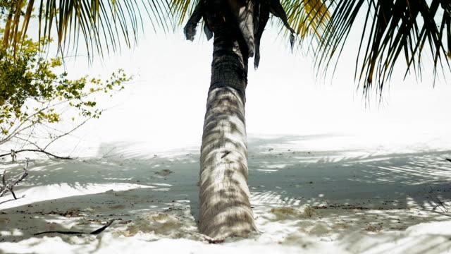 palm on the beach - desert island stock videos & royalty-free footage