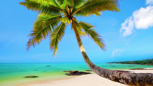 ヤシの熱帯のビーチ