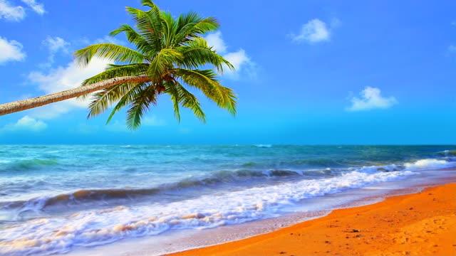 Palm über beach mit Himmel Hintergrund