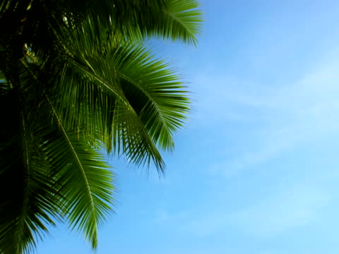 stockvideo's en b-roll-footage met palm pal - bedektzadigen