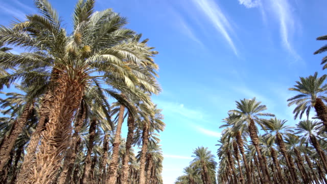 Palm plantation in the Rift Valley