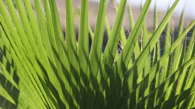 palm plants on the shores of lake malawi, africa, - blattfiedern stock-videos und b-roll-filmmaterial