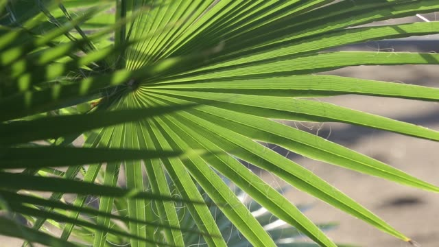 Palm plants on the shores of Lake Malawi, Africa,