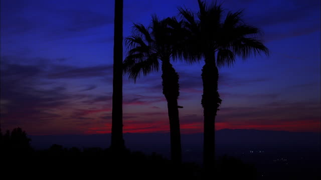 palm silhouettes against blue and red sky as darkness falls, studio city, california available in hd. - fan palm tree stock videos & royalty-free footage