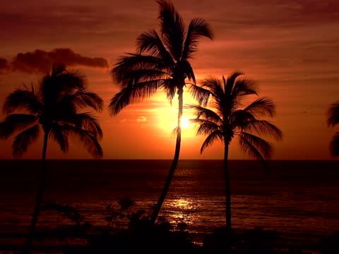 palm silhouettes - ロマンチックな空点の映像素材/bロール