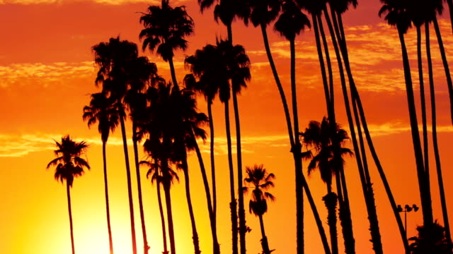 palm springs in kalifornien bei sonnenuntergang - palmenblätter stock-videos und b-roll-filmmaterial