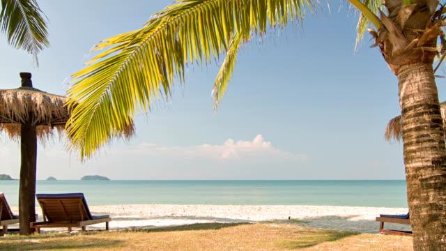 Palm, zonnebank en parasol op het strand